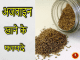 carom seeds in hindi