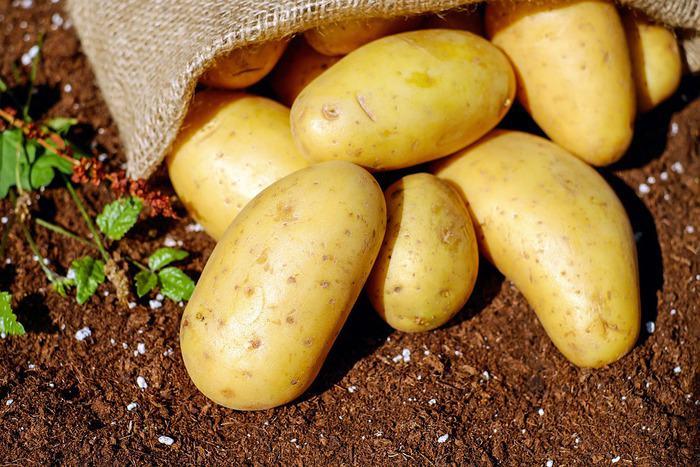 potato images