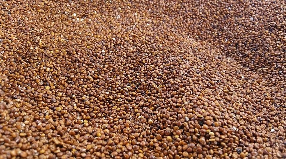 red quinoa in hindi