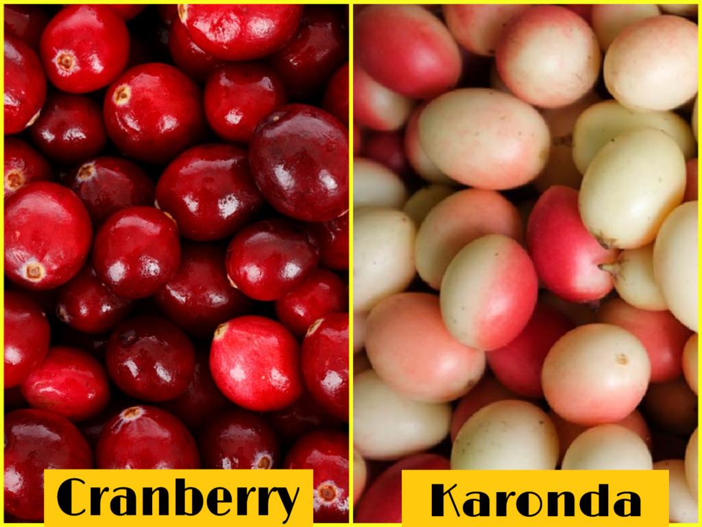 cranberry vs karonda