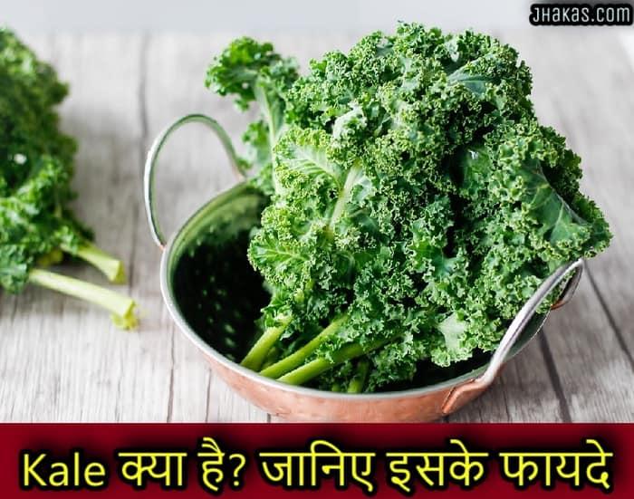 Kale À¤• À¤¯ À¤¹ À¤œ À¤¨ À¤ À¤‡à¤¸à¤• À¤« À¤¯à¤¦ Benefits Of Kale In Hindi