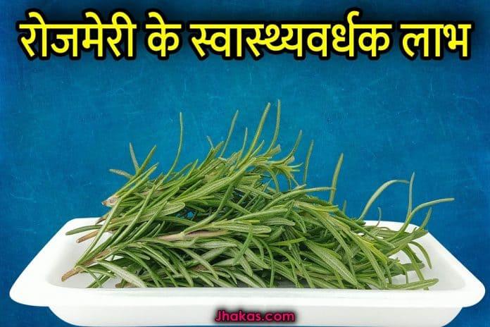 rosemary in hindi