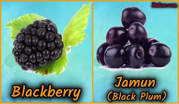 blackberry vs jamun