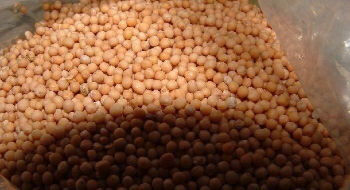 mustard seeds benefits in hindi