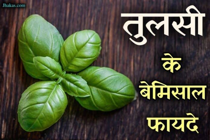 basil in hindi