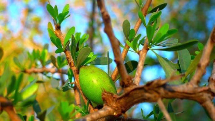 argan oil benefits in hindi