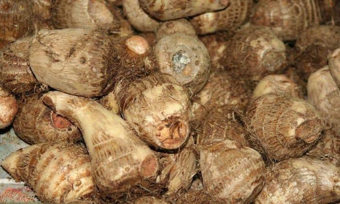 taro root benefits in hindi