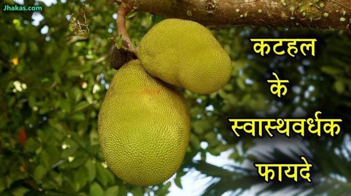 jackfruit in hindi