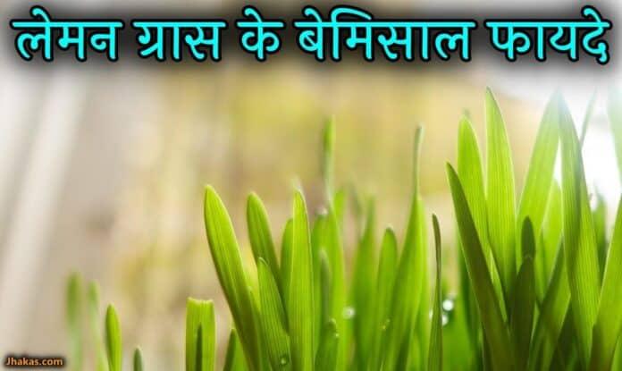 lemon grass in hindi