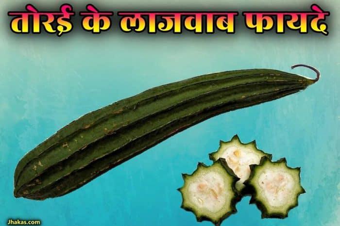 ridge gourd in hindi